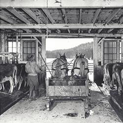 Nelson Farm in Woodstock, VT (USDA, 1941)